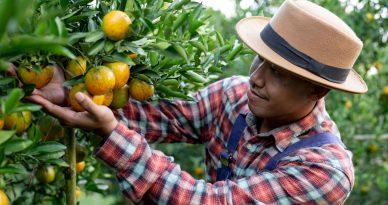 Exportaciones Agroindustria